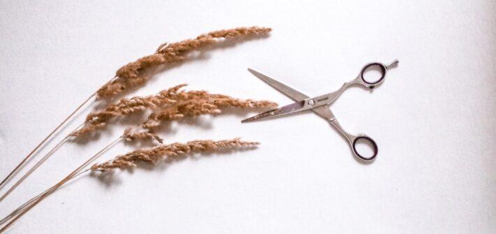 nożyczki fryzjerskie na białym tle w kompozycji z łąkową trzciną.